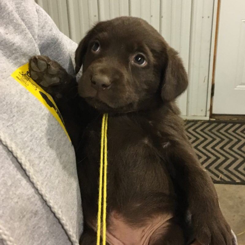 Litter Update–5 weeks 2.23.18